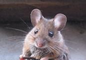 mouse%2025.jpg