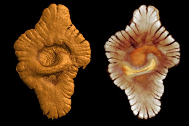 GabonFossils.jpg