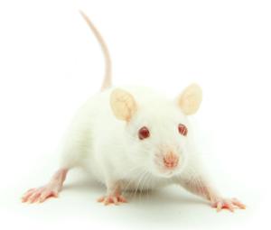 mousemedia