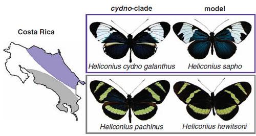 Galanthus_pachinus.jpg