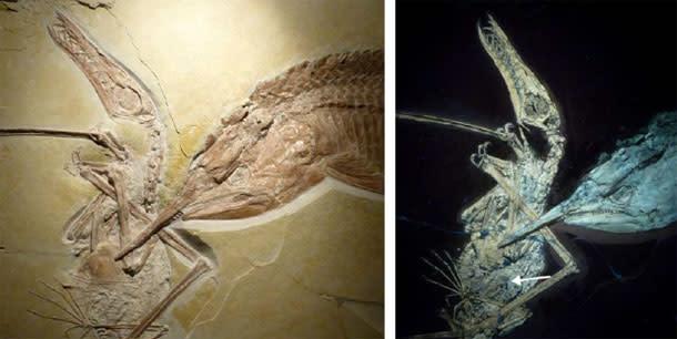 PterosaurFish2.jpg