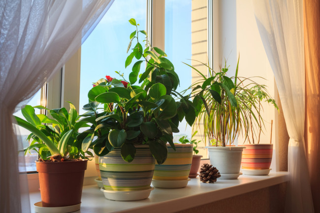 No, House Plants Can't Purify the Air in Your Home | Discover Magazine