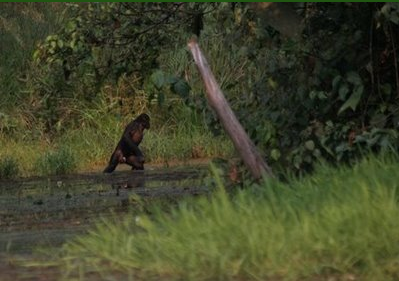 bonobowoods.png