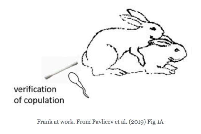 Frank at work. From Pavlicev et al. (2019) Fig 1A