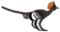 Anchiornis.jpg