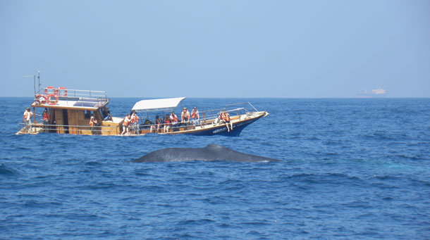 BlueWhale_touristboat.jpg