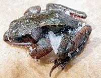 biologyof-frogb.jpg