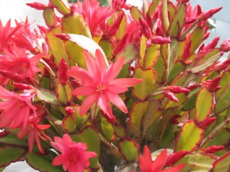 easter_cactus.jpg