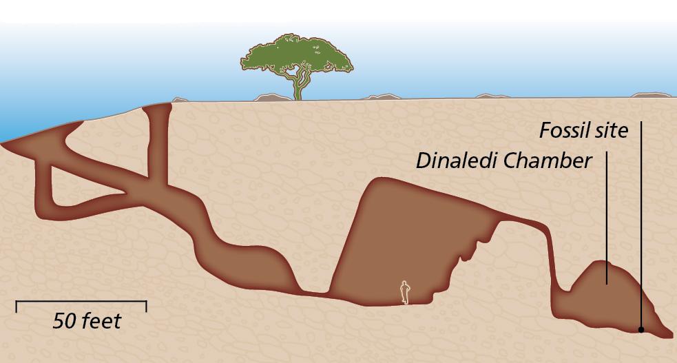 Dinaledi Chamber - Jay Smith
