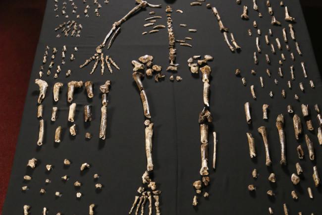Homo naledi collection - UWMadison