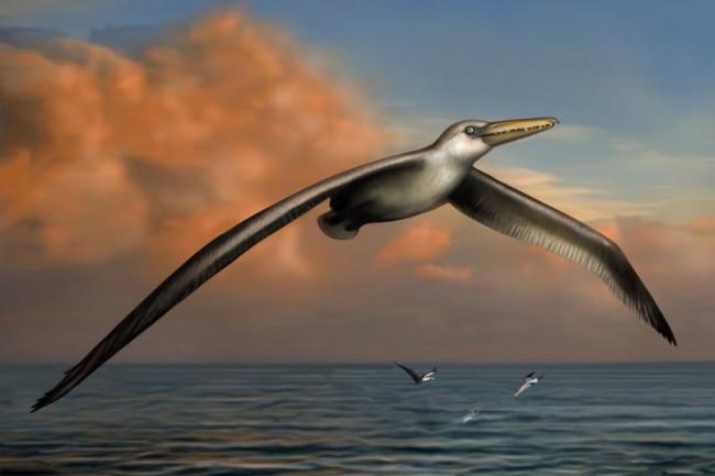bird-1024x855.jpg