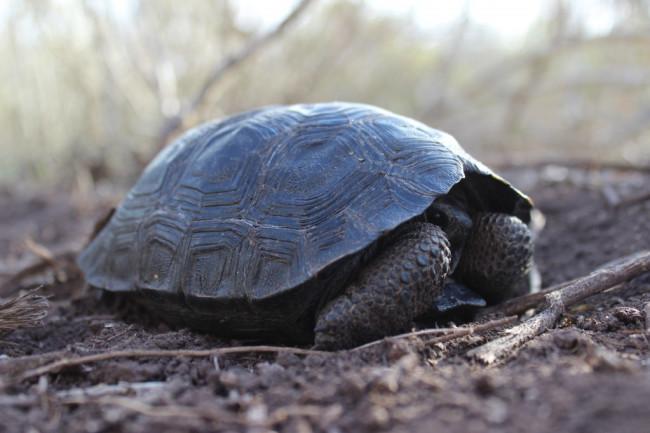 tortoise-1024x682.jpg