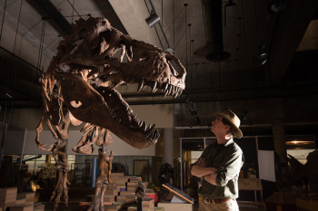 The Most Massive T. rex Ever Found Was Also the Most Elderly