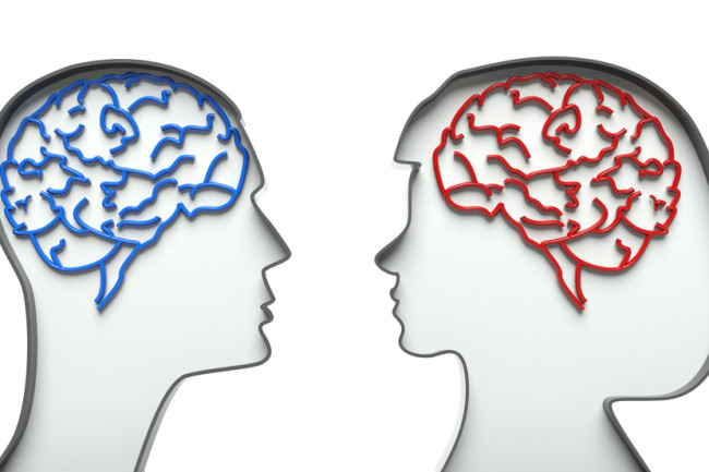 Male Female Brains - Shutterstock