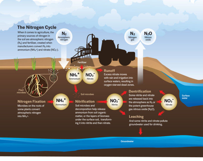 nitrogen-cycle.jpg