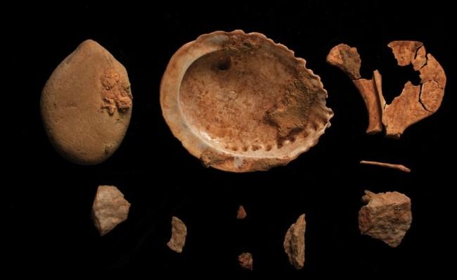 abalone-shell