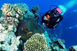 virtual-reef-diver-300x200