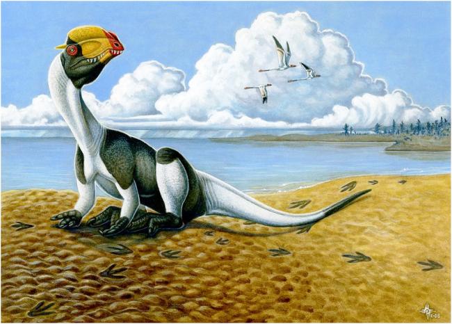 Dilophosaurus resting