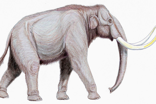 1280px-Mammuthus trogontherii122DB
