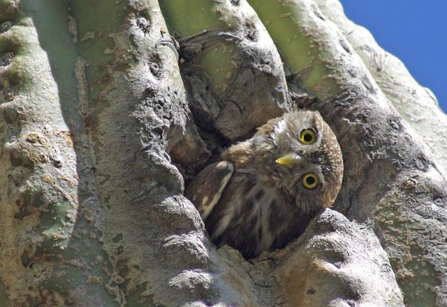curious-owl.jpg