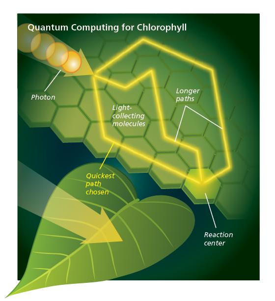 chlorophyll-computing