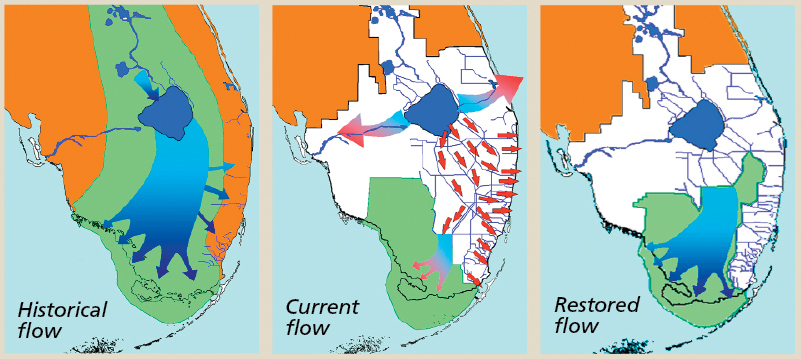 everglades-flow