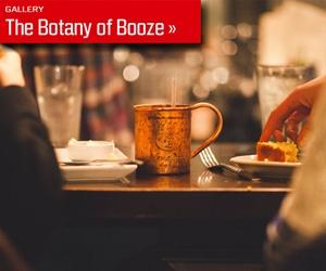 botany-of-booze