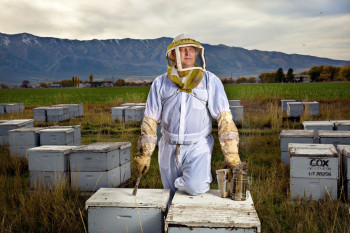 Honeybee Survival Is In Jeopardy