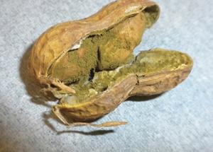 peants grow underground