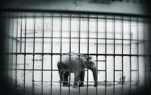 zoo-elephant.jpg