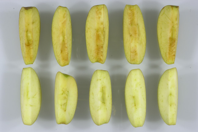 Genetically Modified Non-Browning Apples Are Approved in the U.S. ...