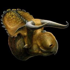 nasutoceratops1-300x300.jpg