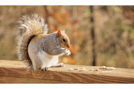 squirell (1)
