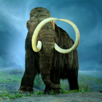 Wooly_Mammoth-RBC.jpg