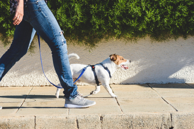 Why Walking Might Be One of the Best Exercises For Health | Discover Magazine