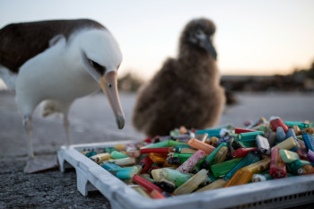 To Fight Plastic Pollution, These Researchers Want Your Pictures of Beach Trash