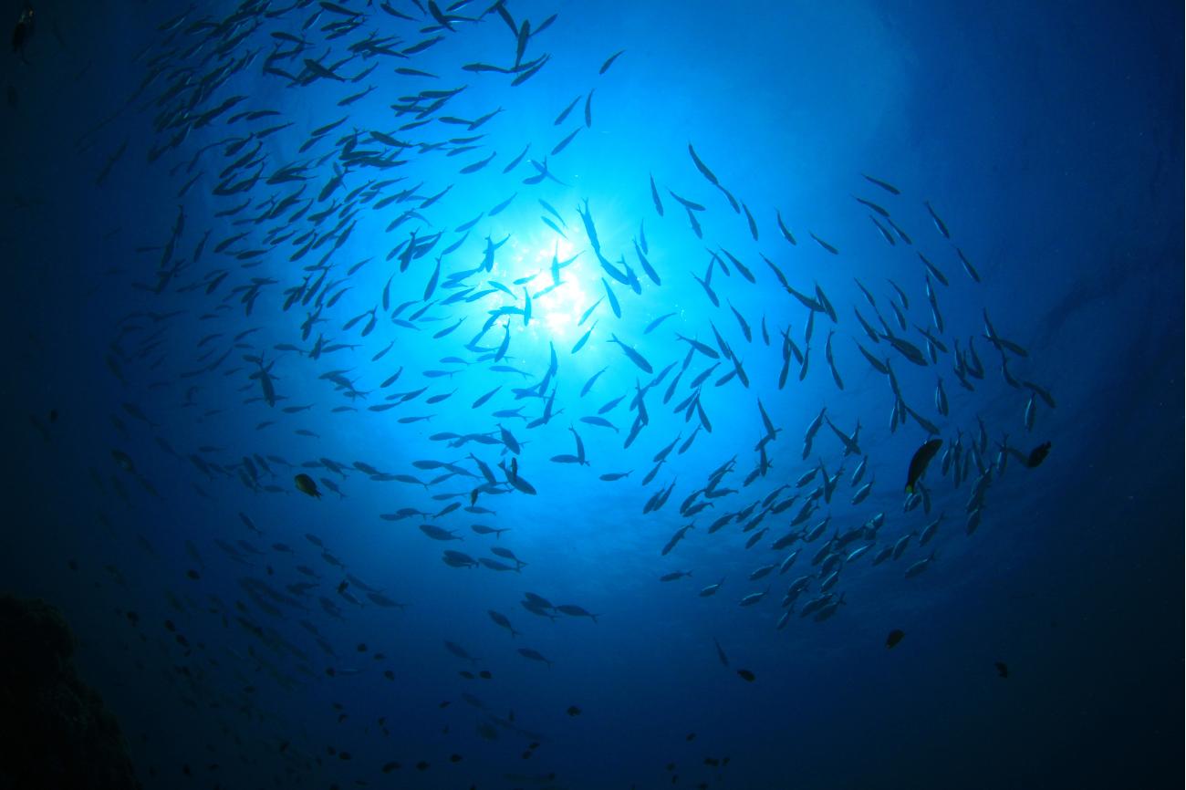 The Ocean Twilight Zone's Mysterious 'False Bottom'