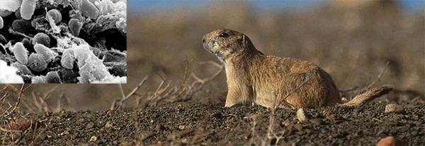 Prairie_dog.jpg