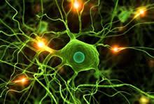 neuron3.jpg