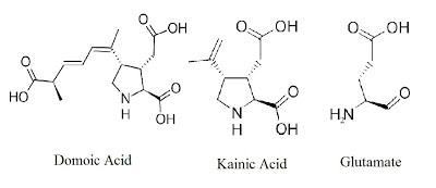 glutamate+kainate+domoic.bmp