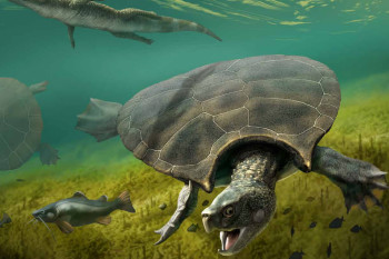 Paleontologists Unearth 9-Foot-Long Turtle With Massive Spikes on its Shell