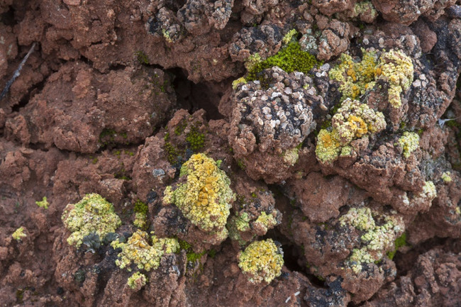 Desert Biocrust