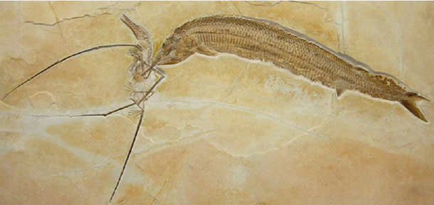 PterosaurFish1.jpg