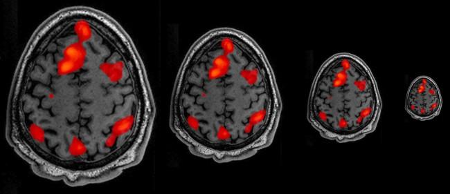 neuroscience_size.jpg