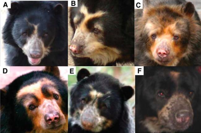 old-bears.jpg