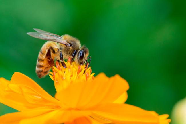 Honeybee counting ah ah ah - Shutterstock