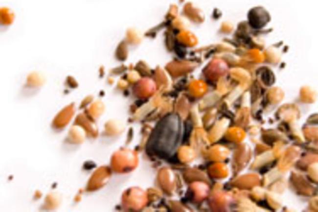 seedskey.jpg