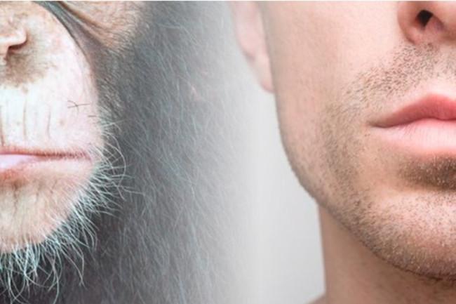 Monkey Human Chins - Shutterstock
