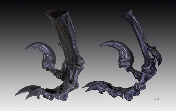 Deinonychus_claws.jpg