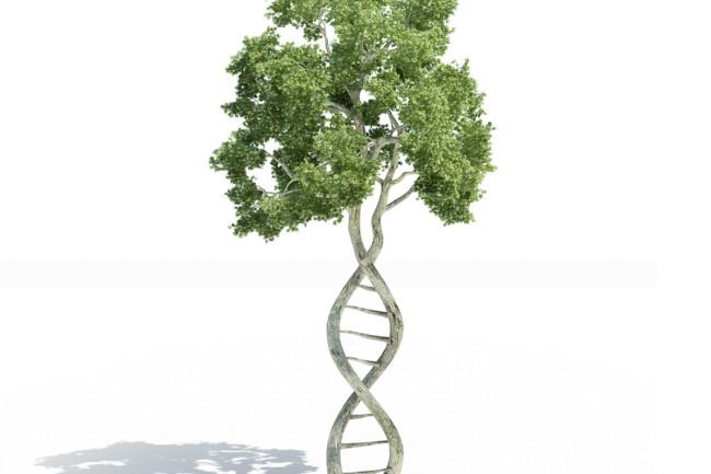 DNAtree.jpg